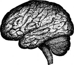 human-brain-1443446941h0A
